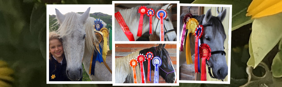 Horse Show On The Web