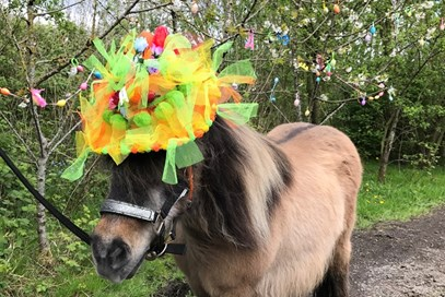1st Sue Carr - Dolly (UK) - April 2017 Class 20 Easter Celebrations