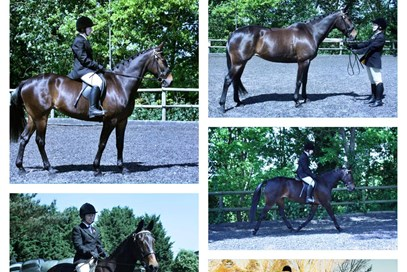 1st Siobhan Dallaway - Oakview Shadow (UK) - June 2017 Class 8 Beautiful Mares