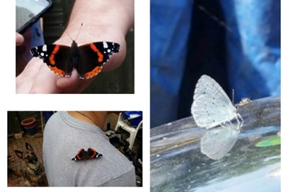 2nd Tracey Hall - Butterfly(UK) - July 2017 Class 1 Countryside Watch
