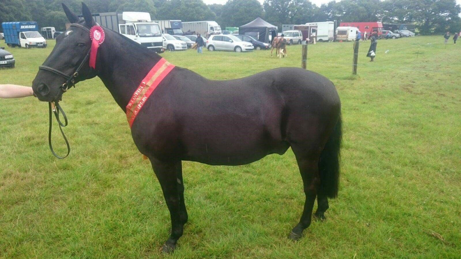 8th Natasha West - Blueberry Patrick(UK) - September 2017 Class 7 Condition & Turnout.