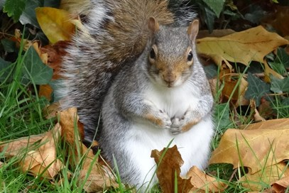 4th Zoe Williams - Squirrel(UK) - October 2017 Class 5 Nature Watch