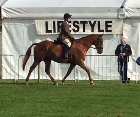 9th= Beverley Cowie - Macetown Boy(UK) - November 2017 Class 8 Condition & Turnout Ridden