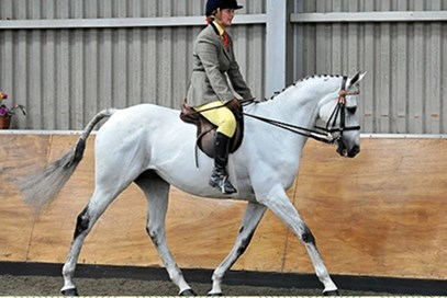 1st Claire Procter - William(UK) - december 2017 Class 8 Condition & Turnout Ridden