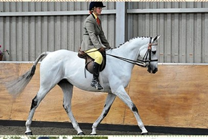 3rd Claire Procter - William(UK) - December 2017 Class 11 Handsome Geldings